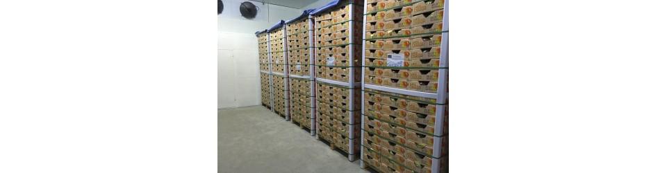 Torres Brazil Packhouse 10